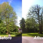 tree-crown-reduction